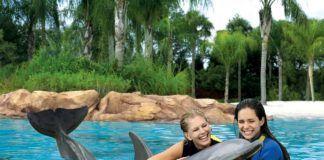 Florida, Orlando, Discovery Cove, Boka biljett till delfinsim