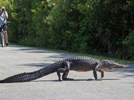 Florida, Everglades, Shark Valley.