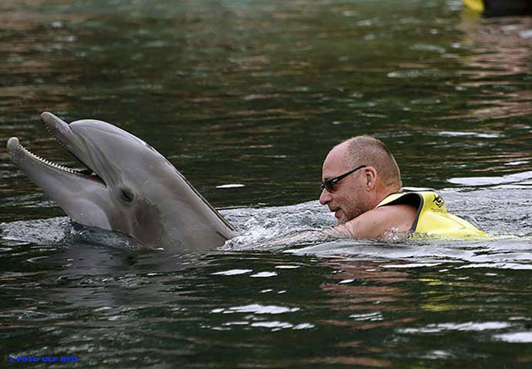 Simma med delfiner Florida. Boka biljett till delfinsim, Swim with dolphins, Schwimmen mit Delfinen