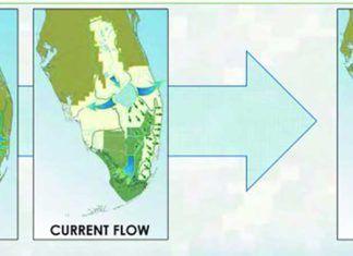 Everglades miljö