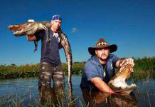 Alligatorer, Everglades Holiday Park, Fort Lauderdale.
