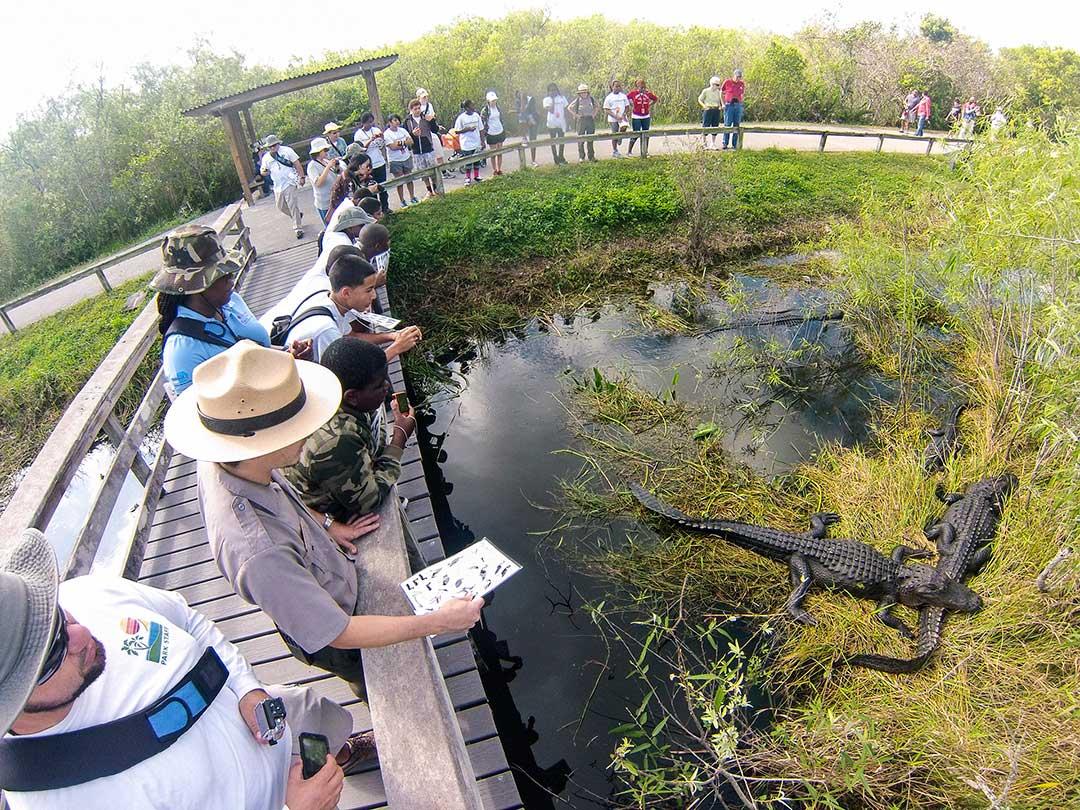 Guide Everglades