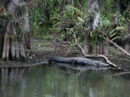 Loop Road Everglades