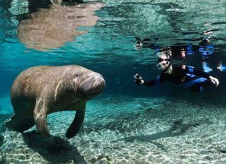 Simma med manatees, Orlando aktiviteter, Places to have fun in Orlando