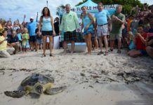 The Turtle Hospital, Marathon, Florida Keys.